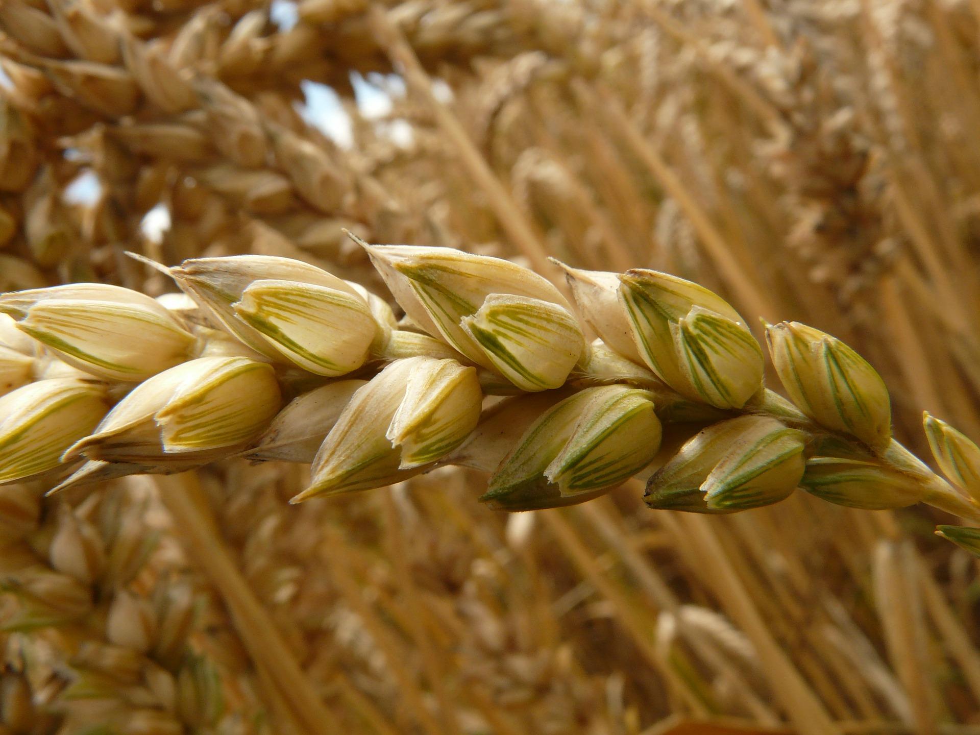 farine piadina romagnola